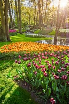 Giardino fiorito di keukenhof. lisse, paesi bassi.