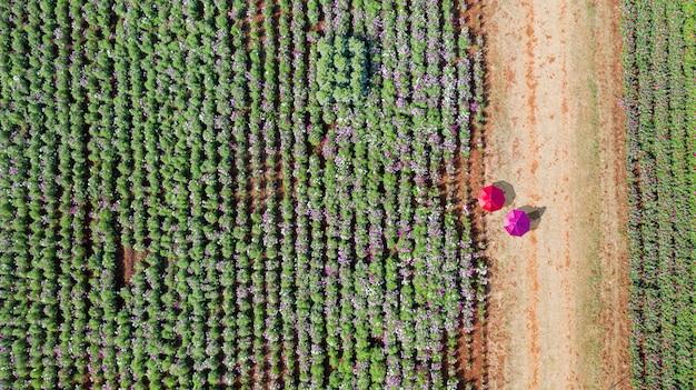 Giardino fiorito, vista aerea dall'alto, con bellissimi ombrelloni colorati