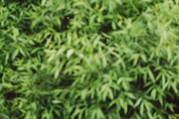 Giardino naturale sfocato
