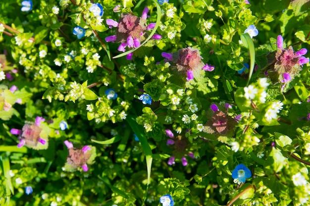 Giardino verde della primavera con i fiori e l'erba variopinti.