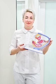 Ginecologo femmina in possesso di modello anatomico per lo studio
