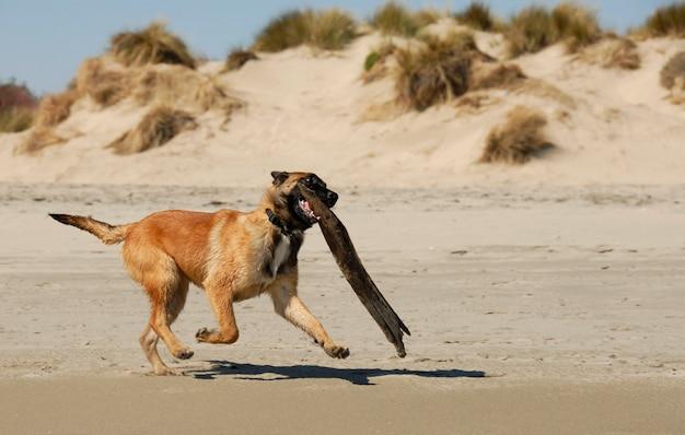 Giocare a cane pastore