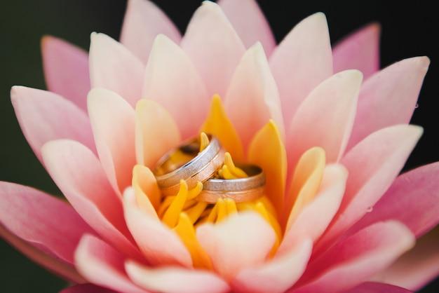 Giorno del matrimonio. fedi nuziali su una ninfea rosa. fedi nuziali che si trovano sopra il loto rosa.