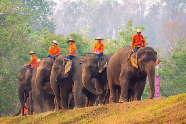 Giorno dell'elefante tailandese al centro di conservazione dell'elefante tailandese