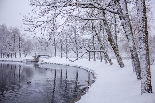 Giorno di neve nel parco. bellissimo parco bianco. nevica nel parco