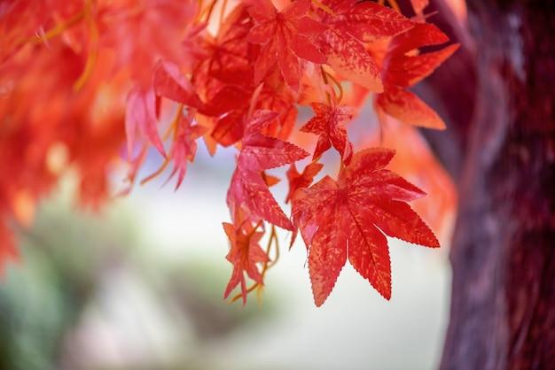 Giorno foglie di acero sfondo