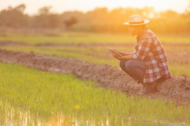 Giovane agricoltore asiatico che per mezzo della compressa al giacimento verde del riso