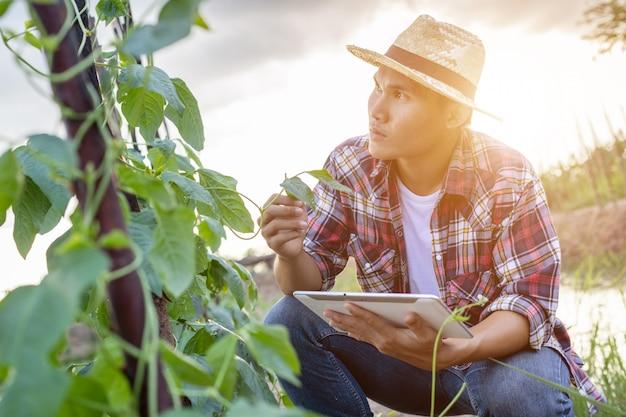 Giovane agricoltore asiatico che per mezzo della compressa e controllando la sua pianta o verdura