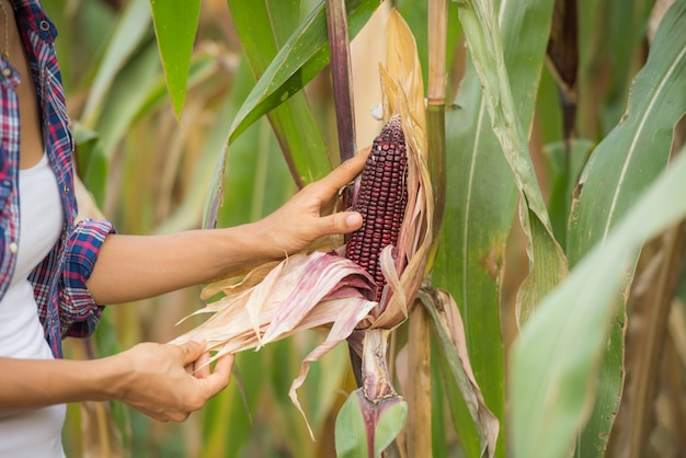 Giovane agricoltore che lavora nel campo e controlla le piante