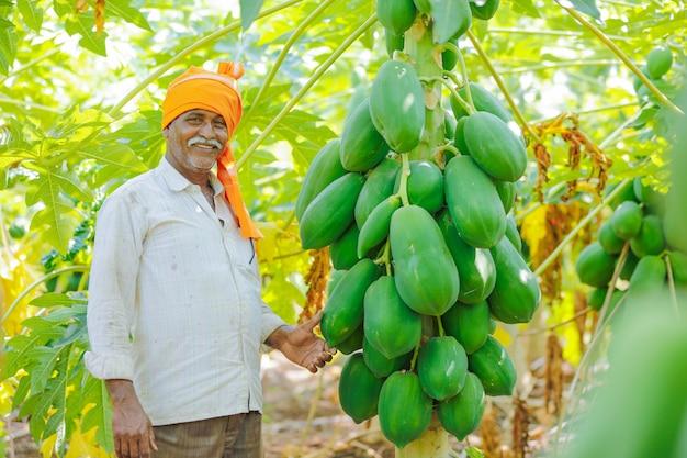 Giovane agricoltore indiano al campo di papaia