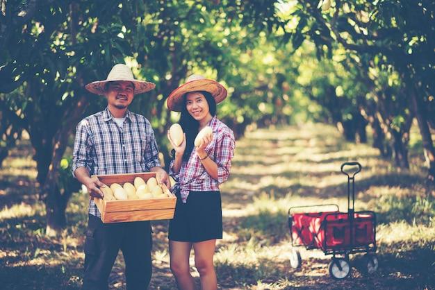 Giovane agricoltore intelligente, fattoria di mango mordern