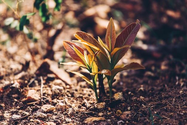 Giovane alberello verde che pianta gli alberi brucianti