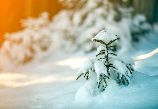 Giovane albero di abete rosso con aghi verdi coperti di neve profonda