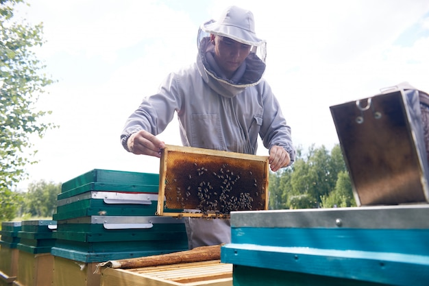 Giovane apicoltore che lavora in arnia