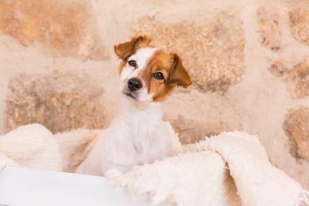 Giovane cane sveglio che posa in una scatola di legno bianca e che esamina la macchina fotografica. amore per il concetto di animali. animali domestici.