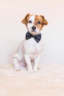 Giovane cane sveglio sopra fondo bianco che indossa una cravatta a farfalla e che esamina la macchina fotografica. amore per il concetto di animali
