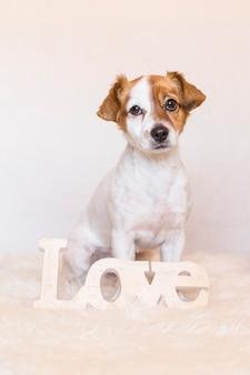 Giovane cane sveglio sopra fondo bianco con la parola di amore e l'esame della macchina fotografica. amore per il concetto di animali