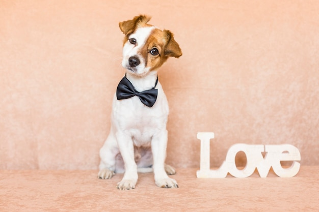 Giovane cane sveglio sopra fondo marrone che indossa una cravatta a farfalla. parola d'amore oltre a lui