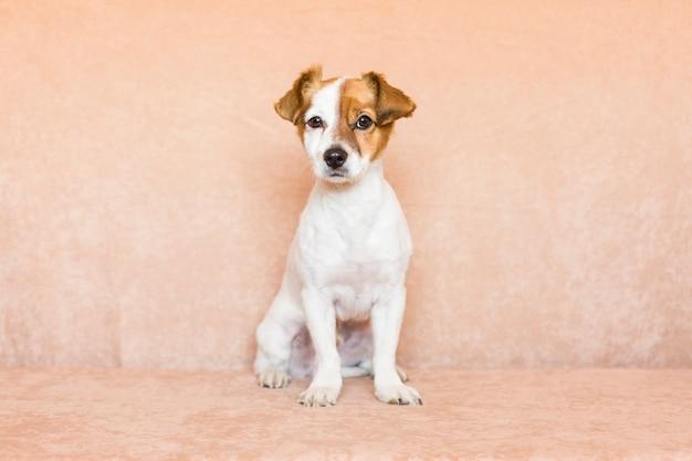 Giovane cane sveglio sopra l'uso marrone del fondo. amore per il concetto di animali