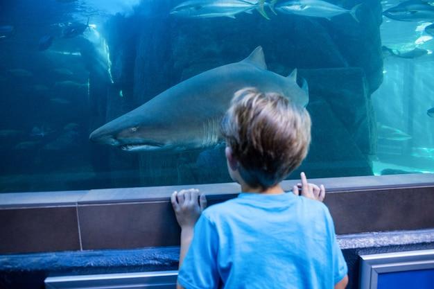 Giovane che esamina lo squalo in un carro armato