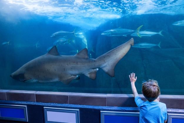 Giovane che tocca un carro armato con pesce e squalo