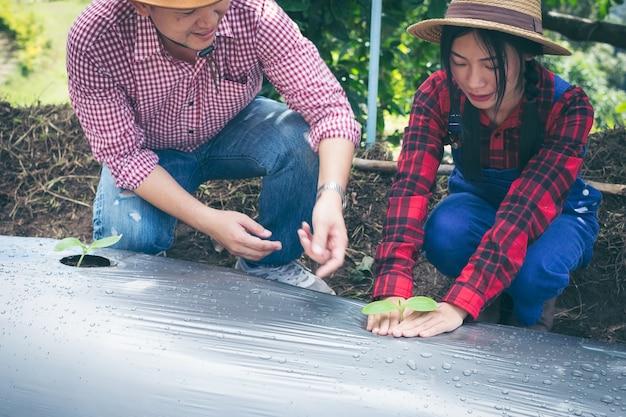 Giovane coppia piantando piantine di ortaggi in giardino