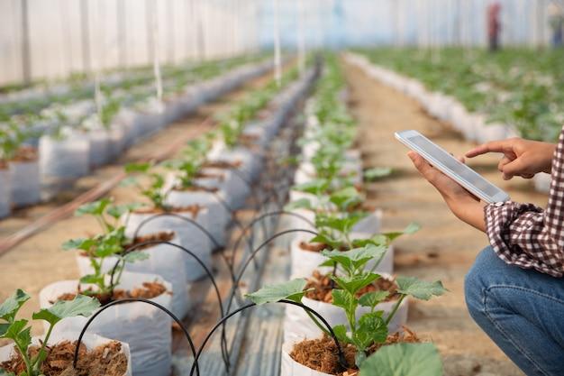 Giovane donna che controlla una piantagione