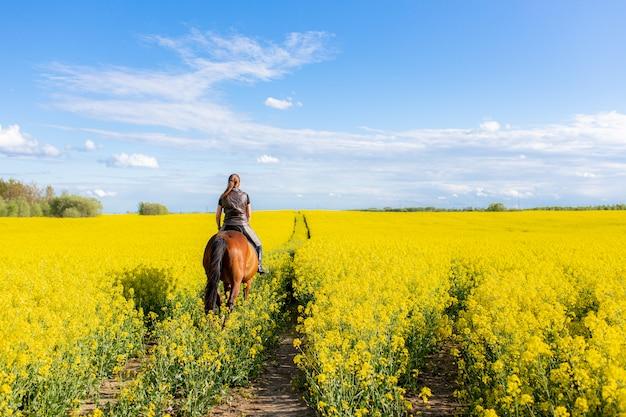 Giovane donna che monta su un cavallo marrone nel campo giallo della colza o del colza con cielo blu