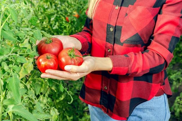 Giovane donna che raccoglie i pomodori.