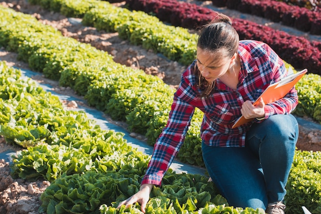 Giovane donna tecnica che lavora in un campo di lattughe con una cartella