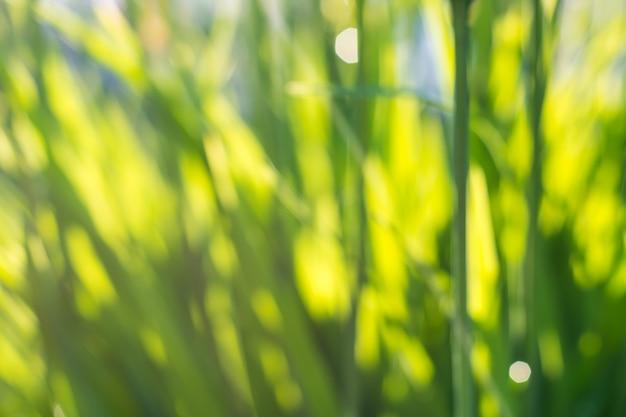 Giovane erba succosa fresca in natura nei raggi di luce solare con un bei bokeh e coccinella scintillanti su una macro verde della foglia.