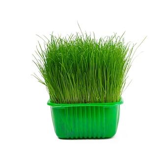 Giovane erba verde succosa isolata su bianco