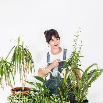 Giovane fiorista femminile che spruzza acqua sulla pianta con la bottiglia dello spruzzo