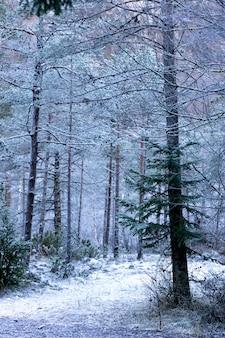 Giovane foresta congelata