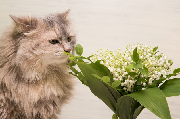 Giovane gatto che odora i fiori di fioritura bianchi freschi in vaso. gattino tabby e fiori di primavera.