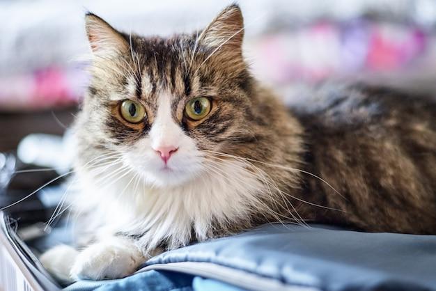 Giovane gatto domestico sveglio a casa, primo piano