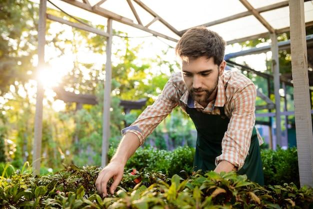 Giovane giardiniere allegro bello che sorride, prendendosi cura delle piante