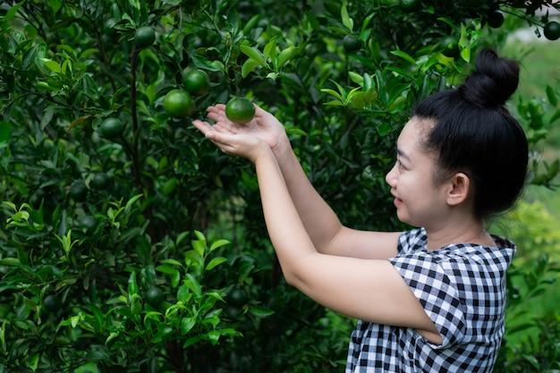 Giovane giardiniere donna asiatica sorridente e raccolta di miele tailandese mandarino arance in giardino, felicità e uno stile di vita sano concetto