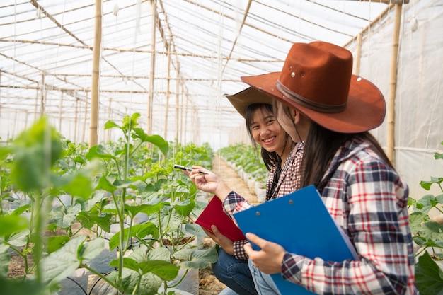 Giovane ingegnere agricolo che studia nuovo genere di melone che cresce nella serra
