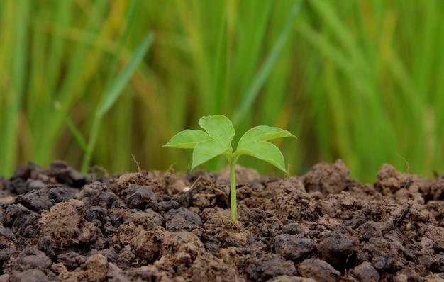 Giovane pianta che cresce in natura