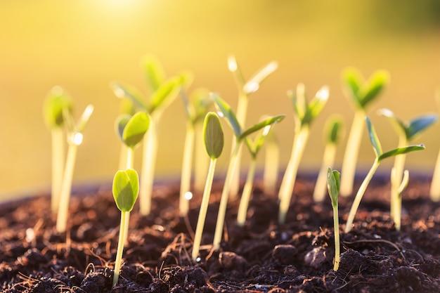 Giovane pianta verde nel terreno
