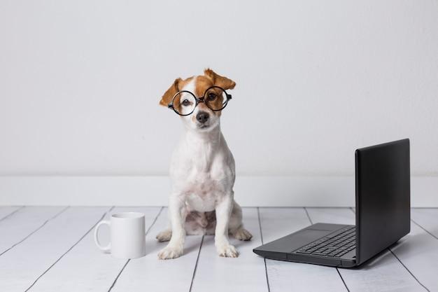 Giovane piccolo cane sveglio che si siede sul pavimento e che lavora al computer portatile. indossa occhiali e una tazza di tè o caffè oltre a lui. animali domestici al chiuso