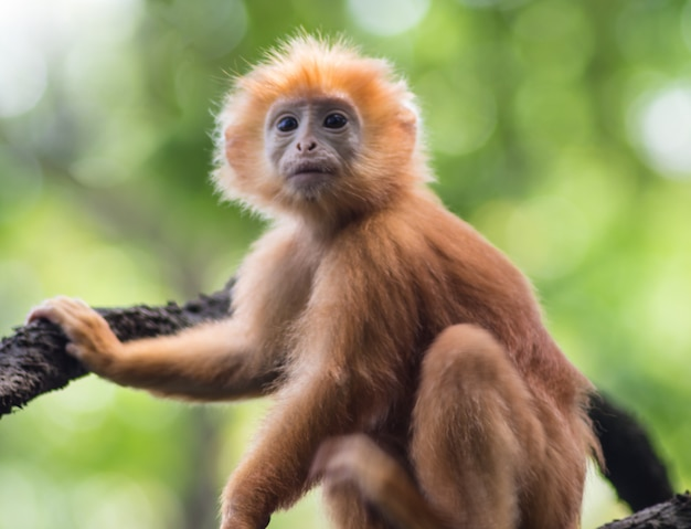 Giovane scimmia rossa su un albero