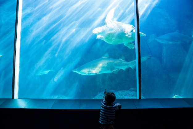 Giovane uomo che punta uno squalo con la sua mano