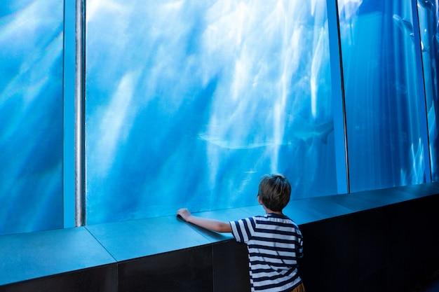 Giovane uomo guardando uno squalo in un grande serbatoio