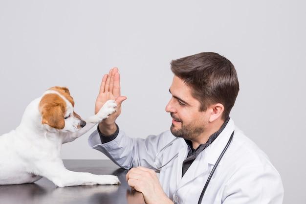 Giovane veterinario con stetoscopio, giocando con un simpatico cagnolino alto cinque.