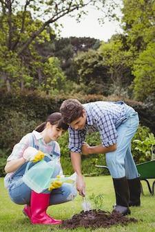 Giovani coppie che innaffiano un alberello in giardino