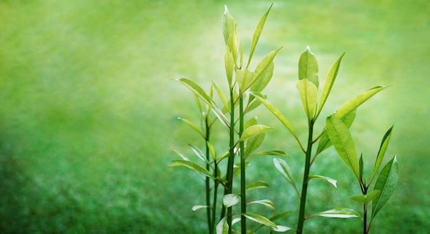 Giovani foglie verdi in natura, simboliche di crescita ed esuberanza