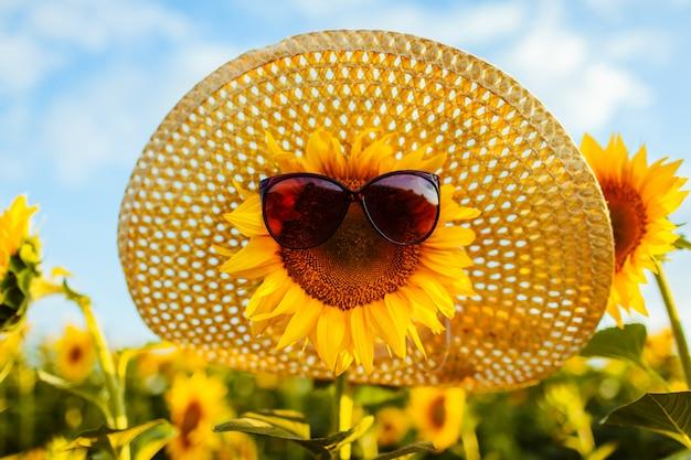 Girasole di fioritura in occhiali da sole e cappello di paglia che crescono nel campo di estate.