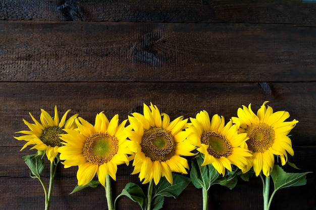 Girasoli gialli luminosi sul bordo di legno rustico naturale